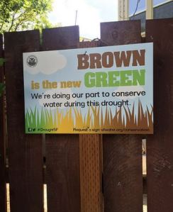 brown new green in drought