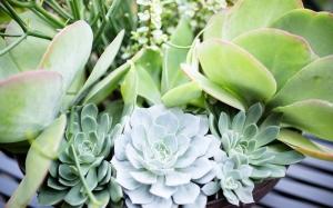 Drought-friendly plants in a garden box.